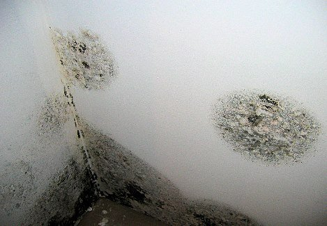 Mold Removal Dec Fire And Water Restoration